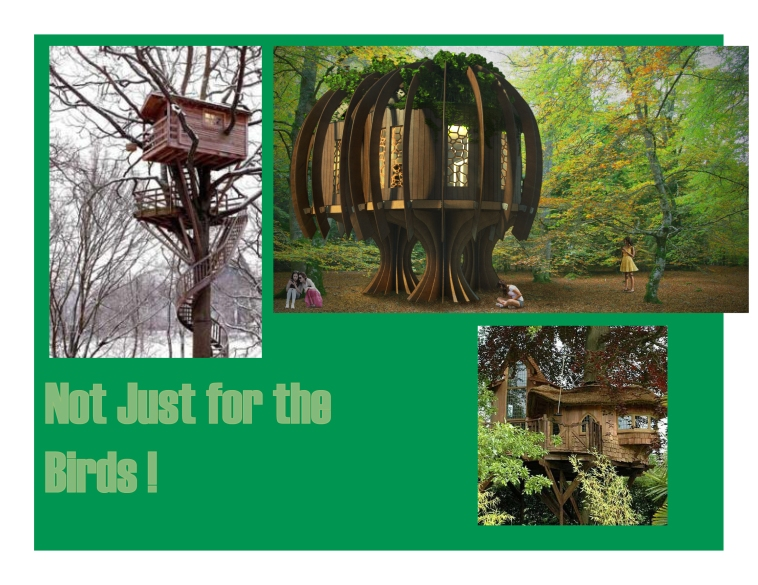 Blue Forest Tree Houses - www.blueforest.com