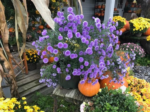 Fall Foliage.jpg